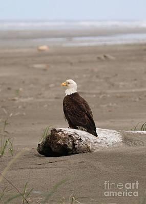 Photograph - Beach Bald Eagle by Carol Groenen