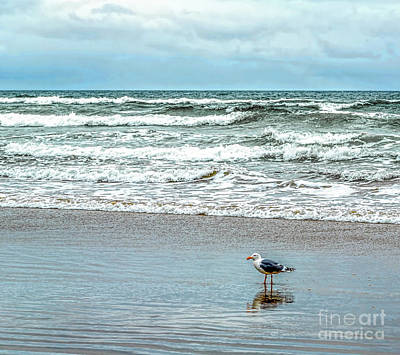 Photograph - Beach Bird by Jon Burch Photography