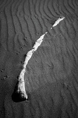 Photograph - Beach Bones 13 by Peter Tellone