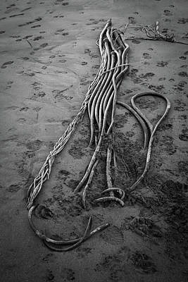Photograph - Beach Bones 3 by Peter Tellone