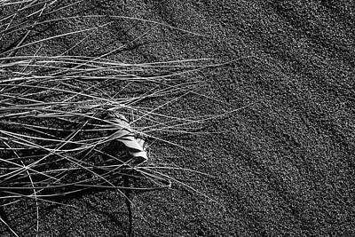 Photograph - Beach Bones 7 by Peter Tellone
