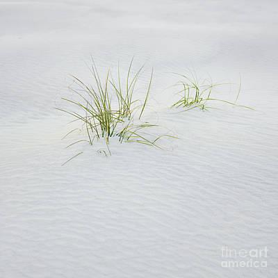 Photograph - Beach Life by Patrick M Lynch