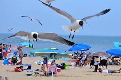 Photograph - Beach Patrol by Kim Bemis