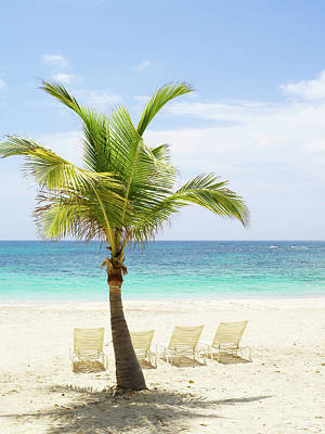 Lounge Chair Photograph - Beach Scene With Palm Tree And Lounge by Sangfoto