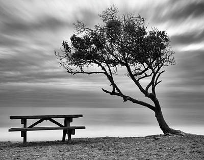 Photograph - Beach Tree by John Rodrigues