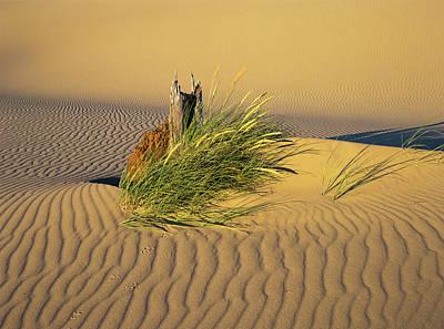 Photograph - Beachgrass And Ripples by Robert Potts