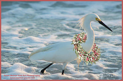 Photograph - Beachy Christmas - Ready For Custom Text by Susan Molnar