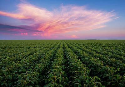 Field Photograph - Bean Field Sunset by Scott Kroeker (natural Light Magic)