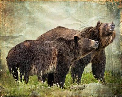 Photograph - Bear Friends by Mary Hone