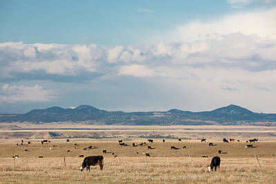 Photograph - Bear Paw Herd by Todd Klassy