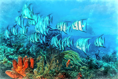 Photograph - Beautiful Angels On The Reef Painting by Debra and Dave Vanderlaan