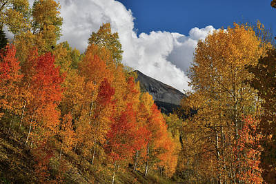 Photograph - Beautiful Aspens On Road To Woods Lake by Ray Mathis