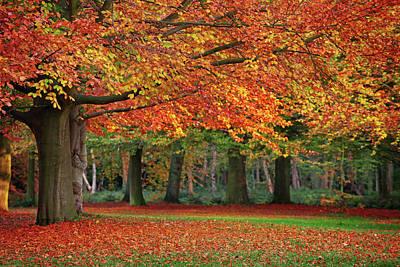 Autumn Photograph - Beautiful Autumn In Park by Lorado