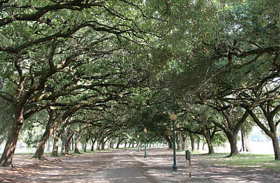 Branch Photograph - Beautiful Boulevard by Smithcjb