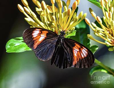 Beverly Brown Fashion - Beautiful Butterfly by Cindy Treger