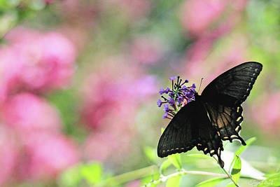 Photograph - Beautiful Butterfly by Trina Ansel