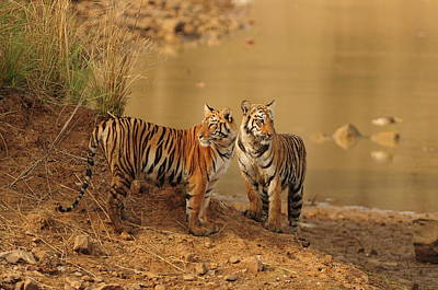 India Photograph - Beautiful Cats Ever by Nishant Shah