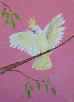 Beautiful Cockatoo Original