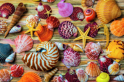 Photograph - Beautiful Exotic Seashells by Garry Gay