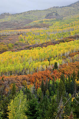 Photograph - Beautiful Fall Colors Along Owl Creek Pass Road by Ray Mathis