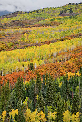 Photograph - Beautiful Fall Colors On Road Up To Owl Creek Pass by Ray Mathis