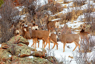 Photograph - Beautiful Herd Of Deer On Mountainside by Steve Krull