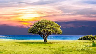 Ballerina Art - Beautiful Lonely Tree At Tropical Beach At Sunset Ultra HD by Hi Res