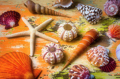 Photograph - Beautiful Marne Seashell Collection  by Garry Gay