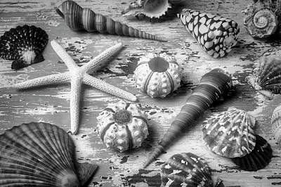 Photograph - Beautiful Marne Seashell Collection In Black And White by Garry Gay