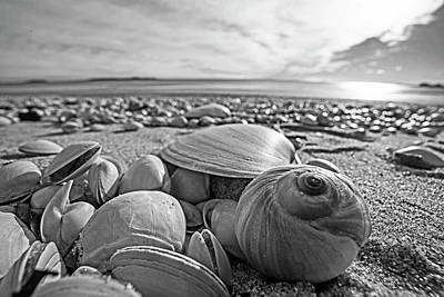 Photograph - Beautiful Seashells On Revere Beach Revere Ma Black And White by Toby McGuire