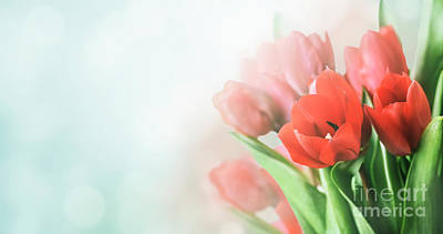 Photograph - Beautiful Spring Tulip Bouquet In Garden With Bokeh Background.  by Jelena Jovanovic