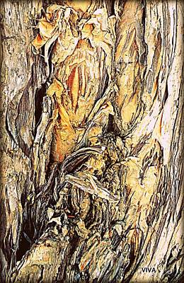 Photograph - Beautiful Tree Bark Study by VIVA Anderson