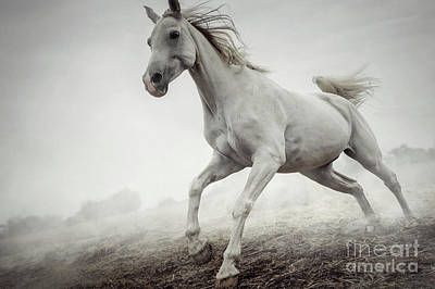 Photograph - Beautiful White Horse Running In Mist by Dimitar Hristov