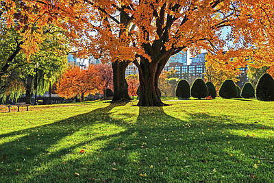 Photograph - Beautiful Yellow Tree Casting A Shadow Boston Public Garden Boston Ma by Toby McGuire