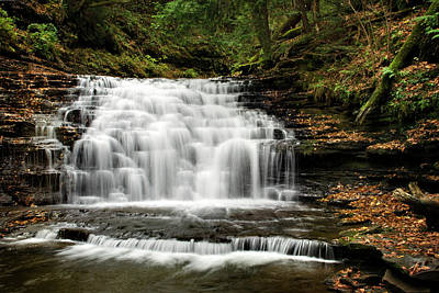 Photograph - Beauty Falls Salt Springs State Park by Christina Rollo