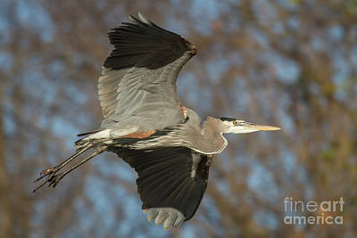 Photograph - Beauty In Flight by David Cutts