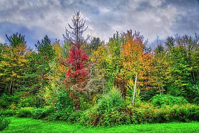 Art Print featuring the photograph Beauty In The Fall Forest by Lynn Bauer