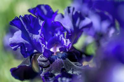 Photograph - Beauty Of Irises. Oklahoma Crude Macro by Jenny Rainbow