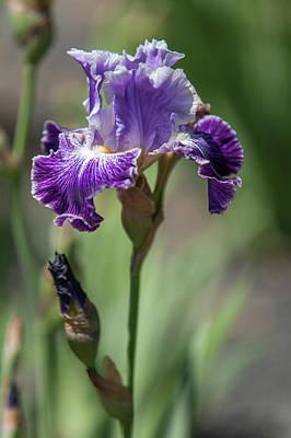 Photograph - Beauty Of Irises. Telepathy by Jenny Rainbow