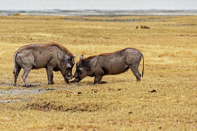 Photograph - Beauty On The Hoof, The Warthog by Kay Brewer