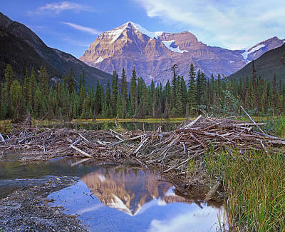 Photograph - Beaver Dam And Pond Surrounded By by Tim Fitzharris/ Minden Pictures