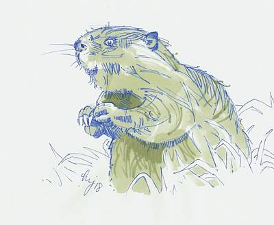 Drawing - Beaver Drawing by Mike Jory