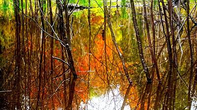 Photograph - Beaver Pond Reflections by Bryan Smith