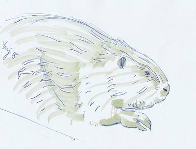 Drawing - Beaver Sketch by Mike Jory