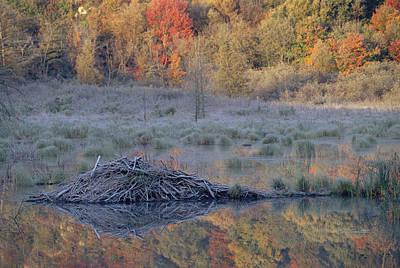 Gatineau Park Photograph - Beavor Pond, Autumn, Gatineau Park by Caroline Commins / Robertharding