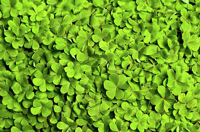Leaf Photograph - Bed Of Clover by Kledge