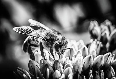 Photograph - Bee Bee by David C Hagerman