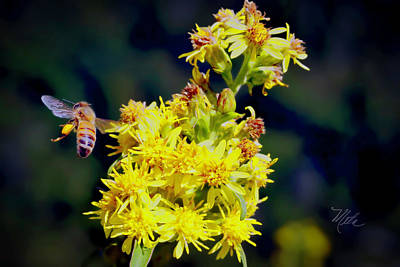 Photograph - Bee On Goldenrod by Meta Gatschenberger