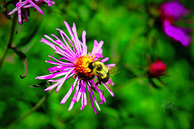 Photograph - Bee On Purple Flower by Meta Gatschenberger