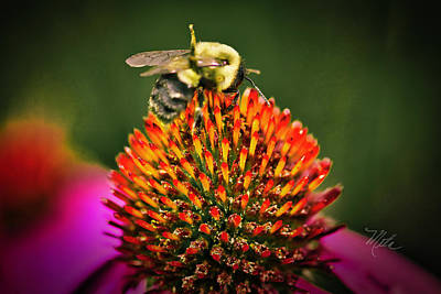 Photograph - Bee On Red Cone Flower by Meta Gatschenberger